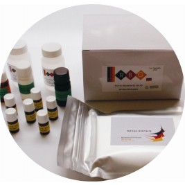 CLIA TEST KITS